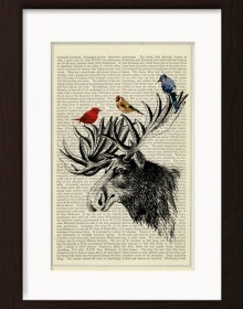 American Moose (Alces Americanus) With Colourful Birds print