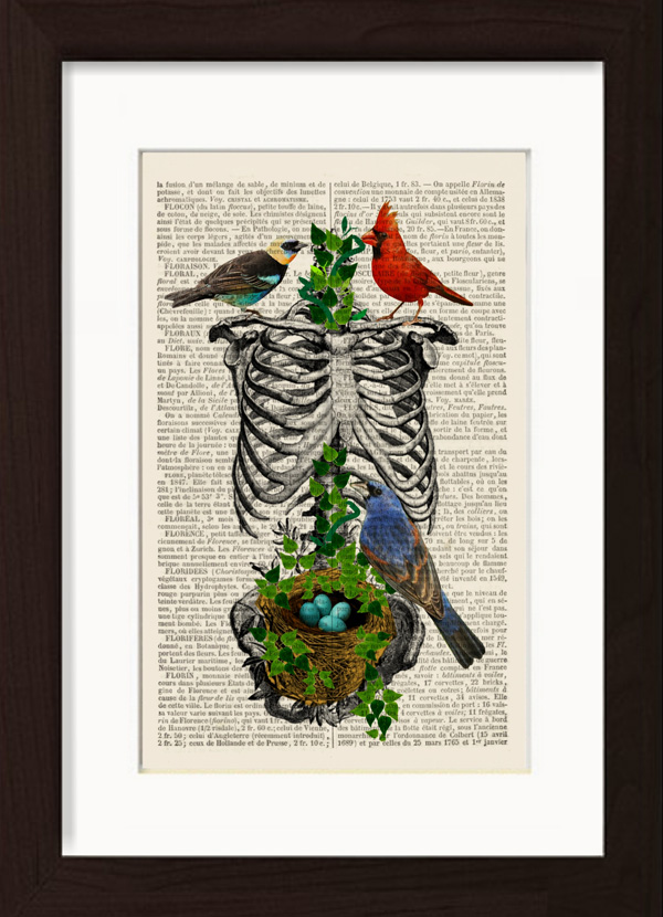 Anatomical Rib Cage With Birds Nest printDICTIONARY PAGE PRINTS