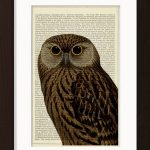 Brown Owl With Yellow Eyes print