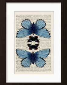 Butterfly Blue Moths print