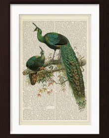 Peacocks On Japanese Maple Branch print