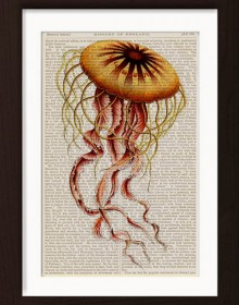 Ernst Haeckel Yellow Jelly Fish 1 print