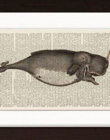 Antique Whale Engraving print