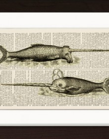 Narwhal Whales print