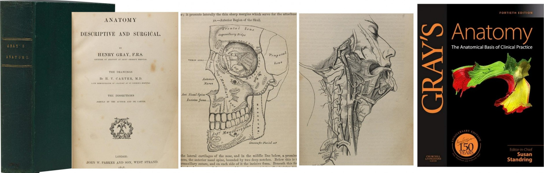 Anatomical Anatomy Prints Bound With Human SkinDICTIONARY PAGE PRINTS