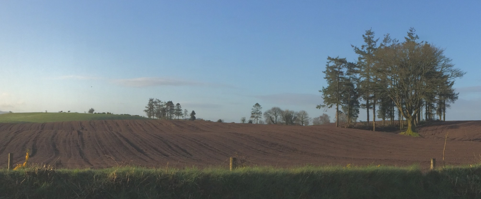 Irish Field Ploughed and Waiting for Crop