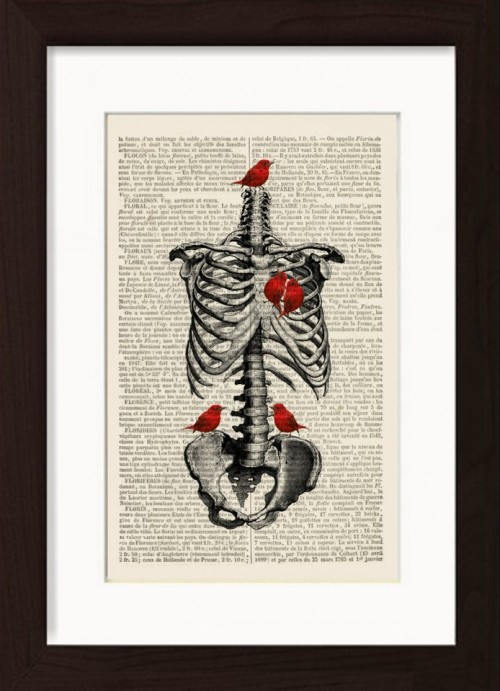 Vintage Anatomical Print- Rib Cage With Red Birds